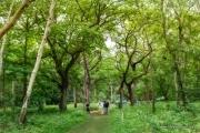029-woods-1