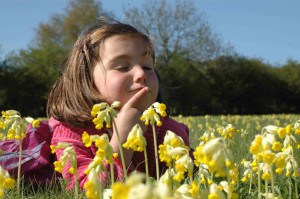 cowslip wishes