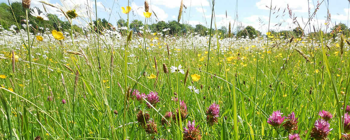 Help us create a fairy Meadow to visit
