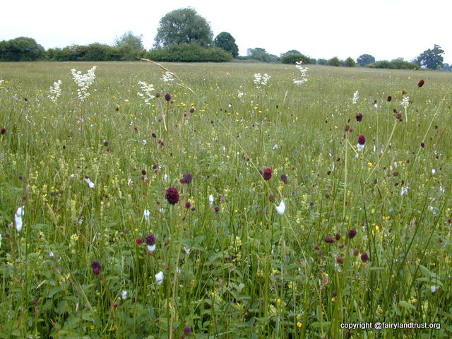 wendlebury meads hay meadow 1 640