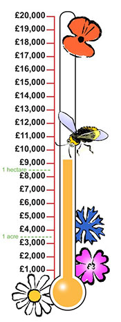 Fairy Meadow Fund total raised so far: over £9,000