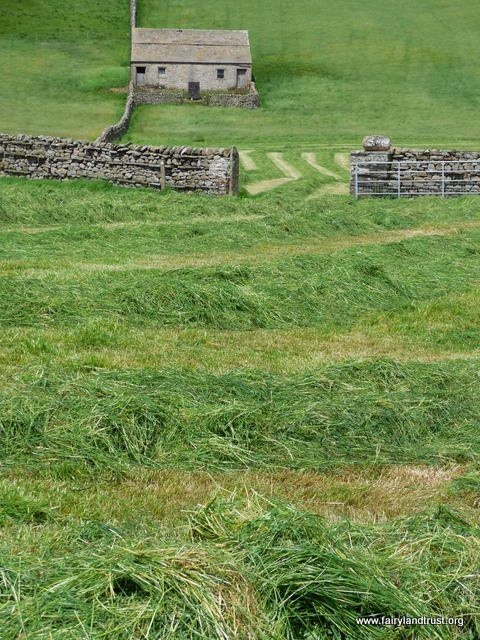 Muker Swaledale 26-06 15 ex hay meadow cut for silage with barn