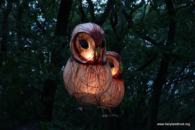 owls rise