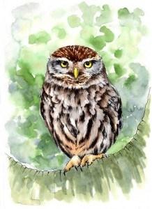 Little Owl smaller