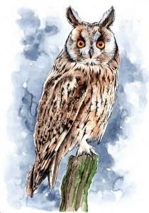 Long Eared Owl smaller