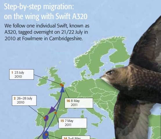 A320 fowlmere swift