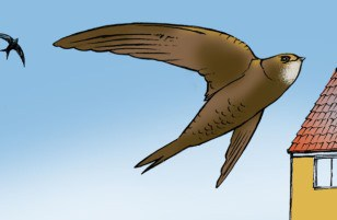 The Swifts are Coming !