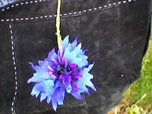 cornflower make 1