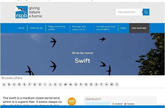 rspb swifts
