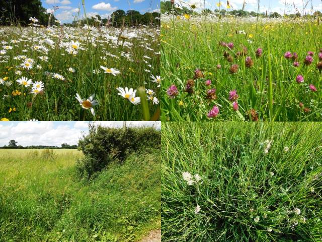 species rich meadow and sp poor hedgerow slide