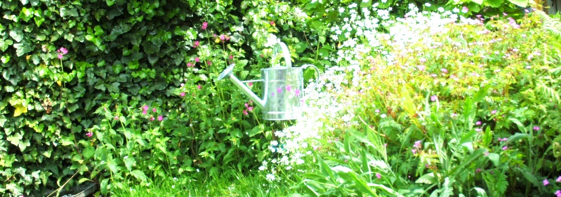 Watering Can Magic: Get The Sign of a Fairy Gardener