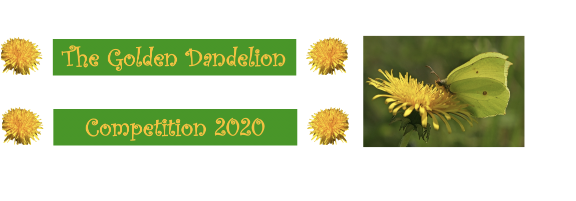 Join the quest for Britain's best dandelion patch
